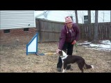 Learning Dog Agility Lap, Tandem, German and Jaakko Turns