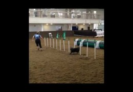 World Agility Open Championships Practice with Team USA