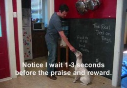 Teaching Your Agility Dog to Sit Still