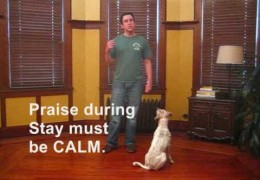 Adding Hand Signal and Distance to Your Agility Dog Stay
