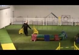 Amazing Dog Agility runs by Jaakko with Janita's Dog