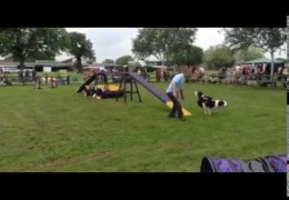 Disabled Fun Day Sports Dog Agility Demonstration