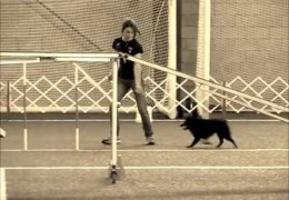 This Schipperke is Rocking Dog Agility