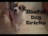 Useful Dog Tricks by Jesse the Jack Russell
