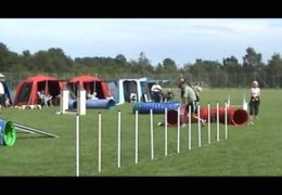 Three Person Dog Agility Relay at Maxi Zoo Cup