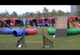 Another 3 Team Dog Agility Relay Doing Awesome