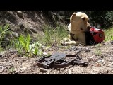 How to Save Your Dog from a Steel Hunting Trap