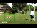 Dog Agility Novice JWW Run and Analysis