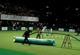 Sarah and Chance Breeze Through this Dog Agility Course