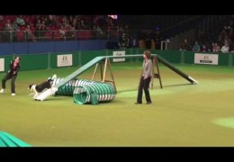 Super Video of the Crufts Dog Agiity Large Singles