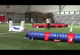 Miss Lilli Walks Away with the Norwegian Dog Agility Open