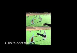 Side-by-Side of Dog Agility Running and 2on 2off Contacts