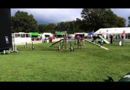 Zaz is Small in Size and Huge in Dog Agility Talent