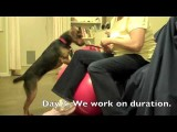 How to Introduction the Exercise Ball for Dog Agility