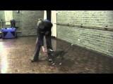Positive Reinforcement Snake Avoidance Training for Dogs