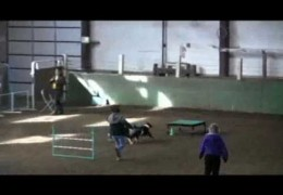 Delta and Bindi Rock the USDAA Dog Agility Brace Course