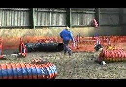 Smudge Losing Sight but Not Love for Dog Agility