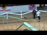 Stunning Runs by the Top Four Medium Dog Agility Teams