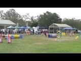 This Dog Agility Team will Leave you Speechless