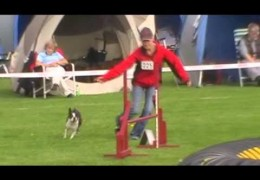 This Boston Terrier Takes on Dog Agility with Ease