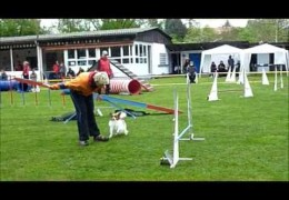 Two Agility Dogs, Two Opposite Attitudes and One Handler