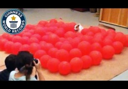 Twinkie Breaks World Record in Balloon Popping