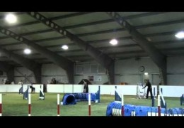 Dog Agility Styles Between Different Teams