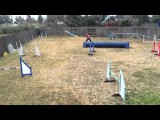 Experiment to Find the Best for You and Your Agility Dog