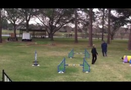 Placement of Reward in Dog Agility Training
