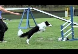 SCFD Dog Agility Competition in Slow-mo