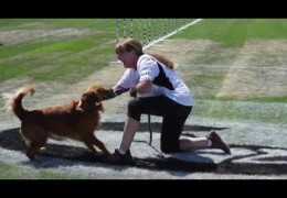 Interview with Cindy Grey Winner of 2015 IDC Large Dog