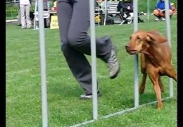 Incredible Montage of Dog Agility Videos with Slow Motion