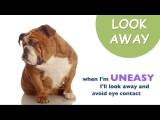 Understanding Dog Body Language for Everyone