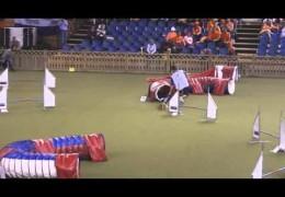 Welsh Corgi has own Ideas at the 2014 FCI Dog Agility