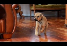 Recall Basics for Beginner Dogs and Puppies Pt 1