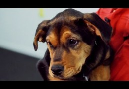 Recall Basics for Beginner Dogs and Puppies Pt 2