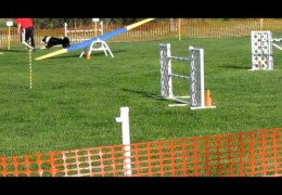 Another Dog Agility Chute Accident