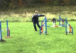 More on Dog Agility Extension and Collection