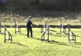 Some Great Dog Agility Handling Options Demonstrated