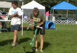 You Wont Believe This Dog Agility Schnauzer is 12