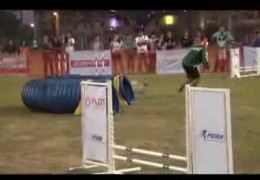 This Shih Tzu is All Speed in Dog Agility