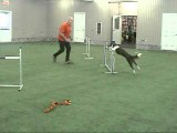 Challenging Dog Agility Blind Crosses