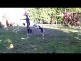 Front Cross vs. Blind Cross in Dog Agility Training