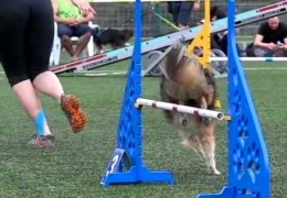 Dog Agility at It's Best and in Slow Motion