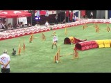 Jaw Dropping 2016 AWC Dog Agility Runs
