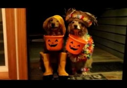 These Dogs Know how to Work the Halloween Gig
