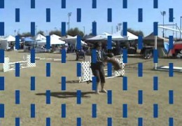 The First MACH Basenji with Amazing Runs