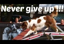 Spotty the Australian Shepherd's Amazing Agility Story