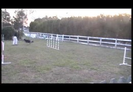 Solid Dog Agility Weave Poles is all About Proofing
