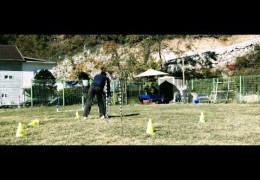 Drills for Dog Agility Weave Pole Entries